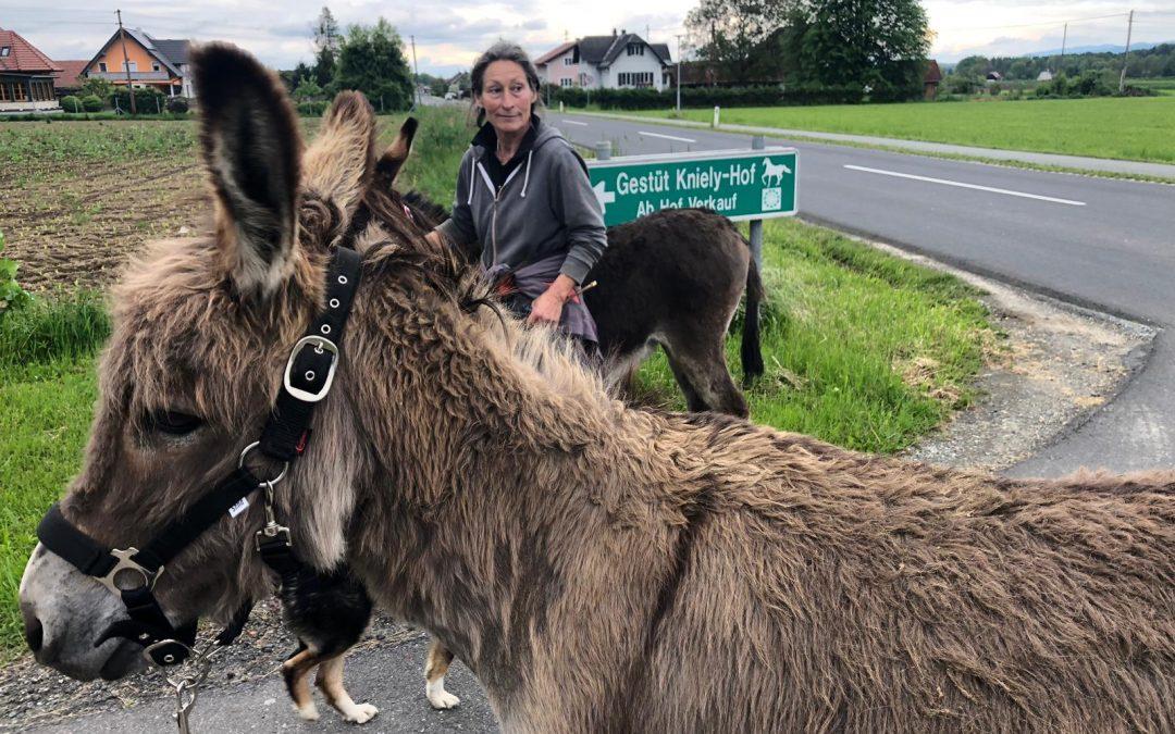 Eselwanderung – Tag 02, Arabellas Eindrücke