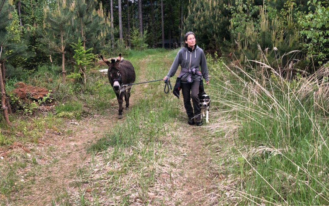 Eselwanderung – Tag 02, Ovids Eindrücke